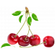 Саженцы вишни купить в Украине от Клиома Сервис