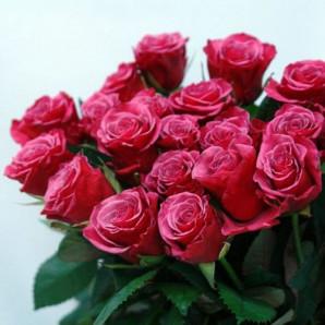 Саженцы роз сорт Амалия