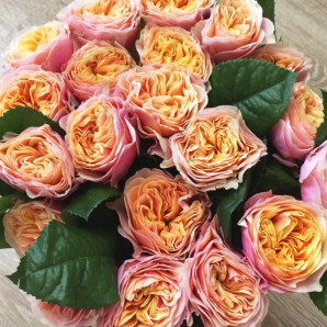 Саженцы роз сорт Вувузела