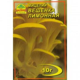 Мицелий гриба Вешенки лимонной, 10 гр