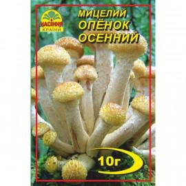 Мицелий гриба Опенок осенний, 10 гр