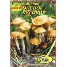 Мицелий гриба Опенок луговой, 10 гр