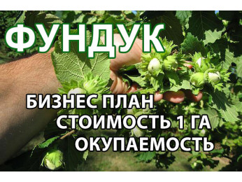 Бизнес на выращивании фундука: расчет стоимости посадки фундука на 1 Га